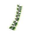 green branch pine tree nature christmas vector image