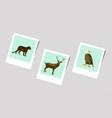 polaroid photo of puma deer eagle vector image