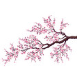Branch of a blossoming cherry vector image