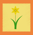 flat shading style plant narcissus vector image