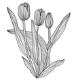 decorative tulips vector image vector image