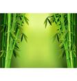 stalks bamboo vector image