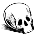 Skull isolated on white vector image vector image