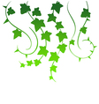 Green ivy vector image