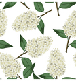 lilac white pattern vector image