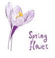 flower of saffron vector image
