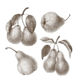 Set of pears vector image vector image