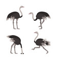 cartoon ostrich bird set vector image