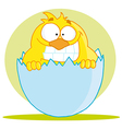 Little Chick Peeking Out Of An Egg Shell vector image