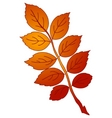 leaf of dog rose vector vector image