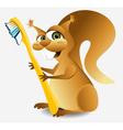 Dental squirrel vector image vector image