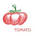 Hand Drawn Tomato Sketch vector image