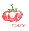 Hand Drawn Tomato Sketch vector image