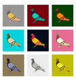 set of in flat style dove vector image