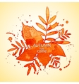 Autumn watercolor rowan leaves and spray vector image vector image