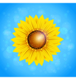 Decorative summer background with sunflower vector image