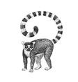 Lemur Engraving vector image vector image