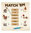 Matching game with many animals vector image
