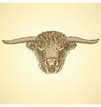 Sketch bull head in vintage style vector image