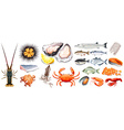 Set of different kinds of seafood vector image