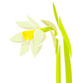 Narcissus flower vector image