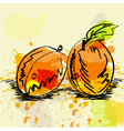 stylized apricot vector image vector image