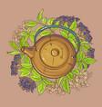 elderberry tea in teapot vector image