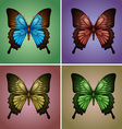 Butterflies in four colors vector image