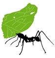 Leaf cutter ant vector image