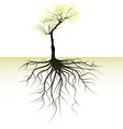 blooming tree with root vector image