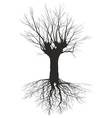 Old deciduous tree with the roots vector image