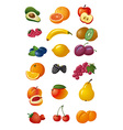 various fresh fruits vector image