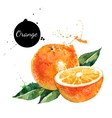 Hand drawn watercolor painting orange on white vector image vector image