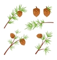 Various spruce branches vector image