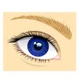 healthy eye vector image