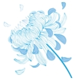 Blue chrysanthemum flower vector image