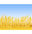 Cereal field vector image
