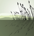 Landscape view Reeds vector image