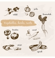 Vegetables herb and roots vector image