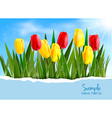 tulip background vector image