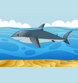 wild shark swimming under the sea vector image