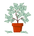 Money tree business banking abundance vector image