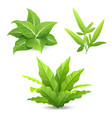tree tropical green leaves collections isolated vector image