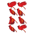 Cardinal Bird Flying Animation vector image vector image