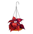 A hanging red plant vector image
