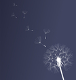 dandelion black and white vector image