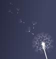 dandelion black and white vector image