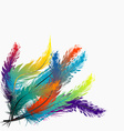 Colorful feathers background vector image vector image
