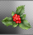holly berry leaves christmas decoration eps 10 vector image