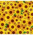 sunflower seamless vector image